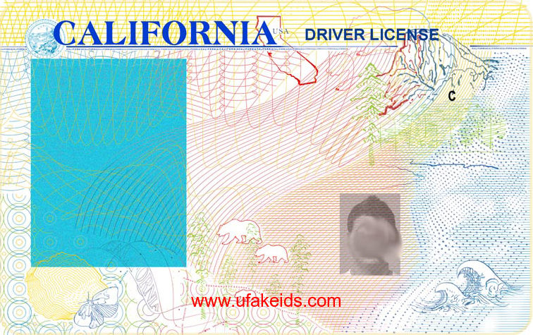 California Fake ID Template – Buy Best Fake IDs | Make a